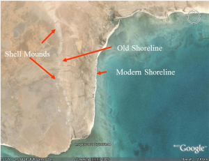 Fig. 4. Aerial view of shell mounds on Janaba West palaeoshoreline